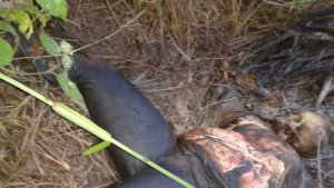 Mau Panen Sawit Temukan Mayat Tanpa Identitas di Inhil
